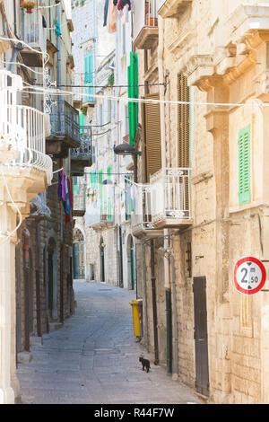 Molfetta, Apulien, Italien - eine schwarze Katze auf Zehenspitzen durch eine historische Gasse in Molfetta Stockbild