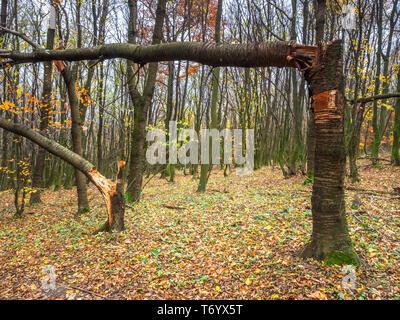 Zerstörte Bäume Stockbild