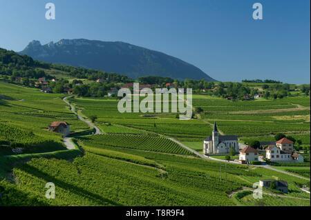 Frankreich, Savoyen, bevor Savoyischen Land, die Weinberge und das Dorf Lucey und der Zahn der Katze Stockbild