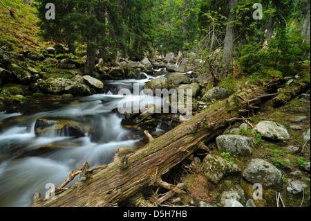 Rumänien / Retezat Nationalpark - alten Wildnis in bucura Tal. Stockbild