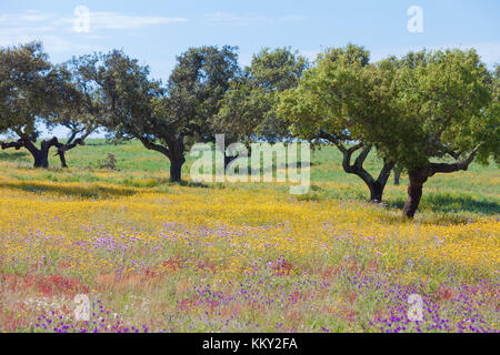 Portugal - Algarve - Landschaft - Europa Stockbild