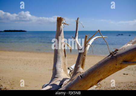 Treibholz am Strand Meer gegen Himmel Stockbild