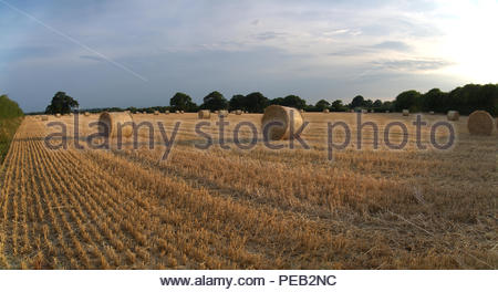 Ernte Hampshire England Strohballen in Feld Stockbild