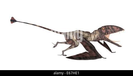 Dinosaurier Dimorphodon / Dinosaurier Dimorphodons Stockbild