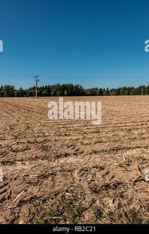 Große leere Maisfeld mit wenig Wald Stockbild