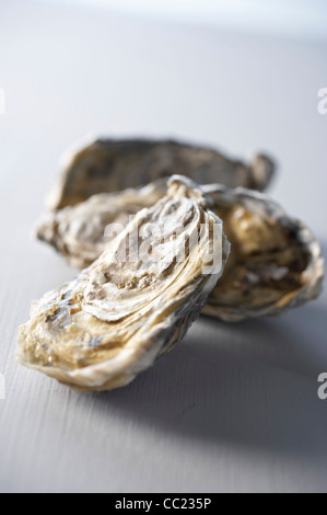 Austern Stockbild