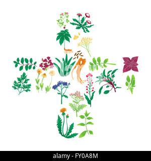 Illustrationen von Heilpflanzen auf weißem Hintergrund Stockbild