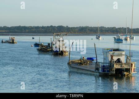 Frankreich, Morbihan, Tour-du-Parc, Auster Betriebe bei Sonnenaufgang Stockbild