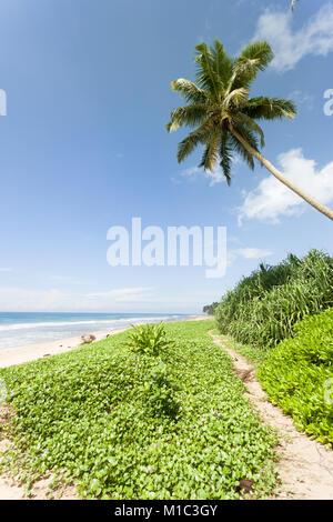 Balapitiya Strand, Sri Lanka - Wandern auf dem kleinen Weg, an dem schönen Strand von Balapitiya Stockbild
