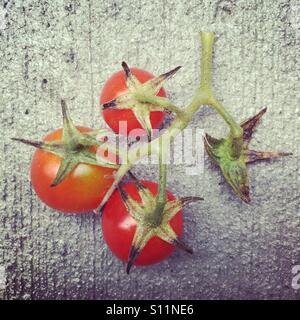 Nach Hause Cherry Tomaten Stockbild