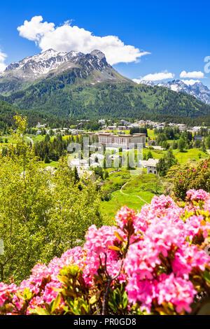 Rhododendren mit Malojapass im Hintergrund, Malojapass, Engadin, Graubünden, Schweiz, Europa Stockbild
