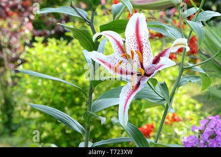 Blumen 664 Stockbild