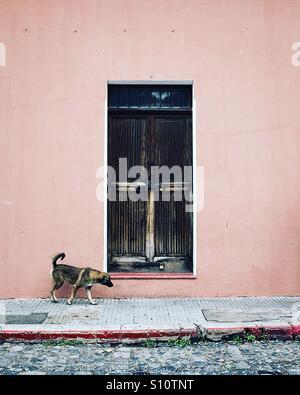 Hund auf den Straßen von Antigua, Guatemala Stockbild