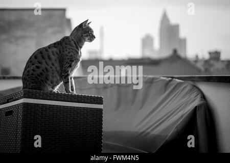 Katze auf Container In Stadt Stockbild