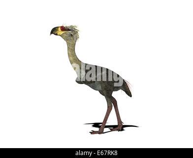 Dinosaurier Phorusrhacos / Dinosaurier Phorusrhacos Stockbild