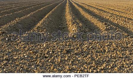 Landwirtschaft gerade Furchen im Feld Stockbild