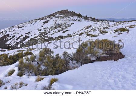 Montana de la Crucita - 1979 m hohen Berg und der vulkanischen Landschaft der Nationalpark Teide mit Schnee bedeckt. Teneriffa Kanarische Inseln Spanien. Stockbild