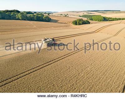 Ernte Antenne Mähdrescher schneiden Sommer Weizenfeld farm Erntegut mit Traktoren Anhänger Stockbild
