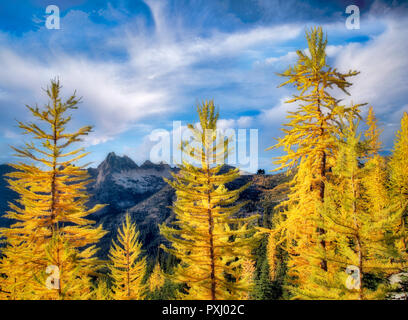 Tamarack oder Lärche im Herbst Farbe. North Cascades National Park. Washington Stockbild