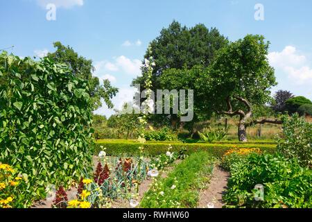 Bauerngarten mit Sommerblumen, Bruchhausen, Bruchhausen-Vilsen, Niedersachsen, Deutschland, Europa Stockbild