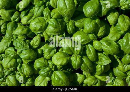 Nahaufnahme von grünen Blättern Stockbild
