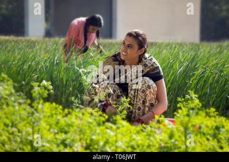 Ländliche Frau arbeiten in der Landwirtschaft Feld an einem sonnigen Tag. Stockbild
