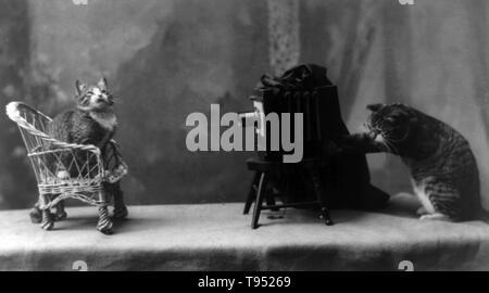"""Mit dem Titel: """"In der Rogue Galerie 'Katze stellt sich auf einen Stuhl vor eine andere Katze Betrieb einer Kamera sitzt. Kein Fotograf gutgeschrieben, 1898. Stockbild"""
