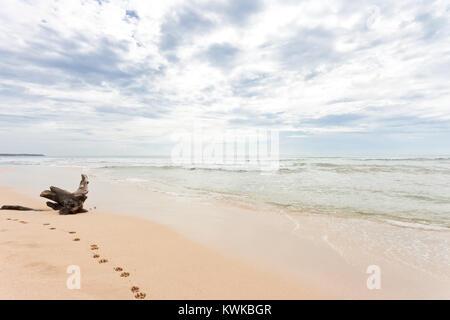 Asien - Sri Lanka - induruwa - ein riesiger Stumpf am Strand Stockbild