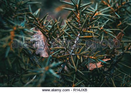 Nahaufnahme von toten Pflanzen in einem Feld Stockbild