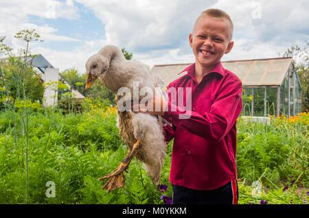 Kaukasische boy Holding Ente auf der Farm Stockbild