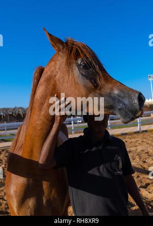 Arabian Horse in alhazm Stud, Provinz Najran, Khubash, Saudi-Arabien Stockbild