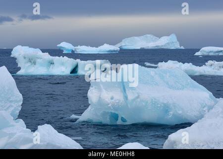 Eisberge und große Stücke von Eis an der Brown Bluff an der Antarktischen Halbinsel, Antarktis Stockbild