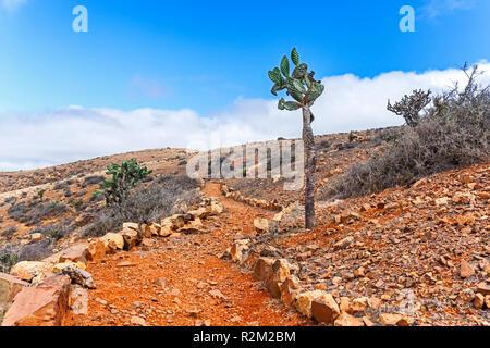 Kaktus in Wilden vulkanischen Landschaft, Fuerteventura, Kanarische Inseln Stockbild