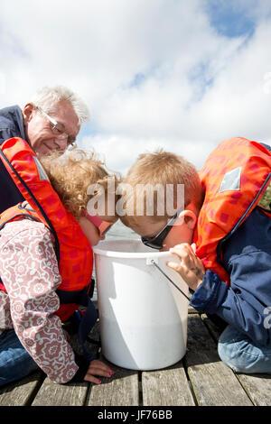 Kinder suchen in Eimer, Großvater im Hintergrund Stockbild