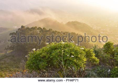 San Cristobal de La Laguna Tal in Abend Nebel, im Nordosten von Teneriffa Kanarische Inseln Spanien. Vom Mirador de Jardina gesehen. Stockbild