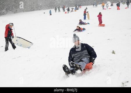 """Box, Wiltshire, UK. 1. Feb. Leute hinunter rodeln die schneebedeckten Hänge der """"Gemeinsamen in fallenden Schnee. Credit: Nick Upton/Alamy Leben Nachrichten. Stockbild"""
