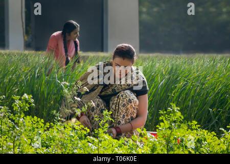 Gerne suchen ländlichen Frau arbeiten in der Landwirtschaft Feld an einem sonnigen Tag. Stockbild