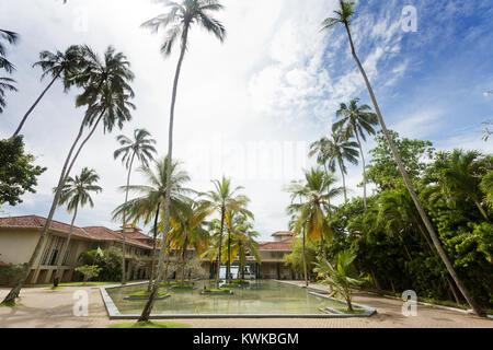 Asien - Sri Lanka - induruwa - riesige Palmen in einem Resort Stockbild