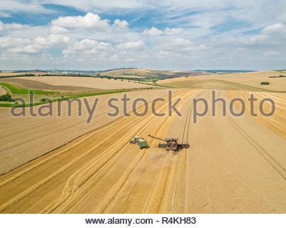 Ernte Antenne Landschaft des Mähdreschers schneiden Sommer Weizenfeld Ernte mit Traktoren Anhänger unter blauem Himmel auf der Farm Stockbild