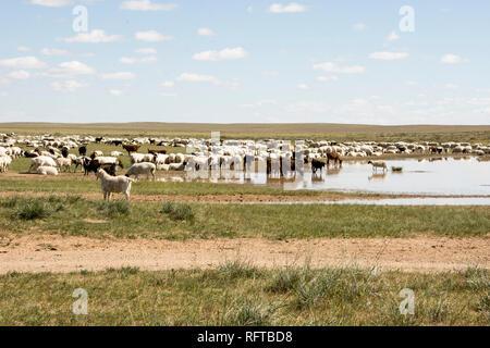 Herde nomadischen Hirten der Schafe und Ziegen mit Steppen Steppen der Mongolei, Asien Stockbild