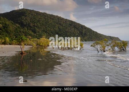 Mangroven in der Brandung am Strand von Cape Tribulation im Daintree Nationalpark in Queensland, Australien Stockbild