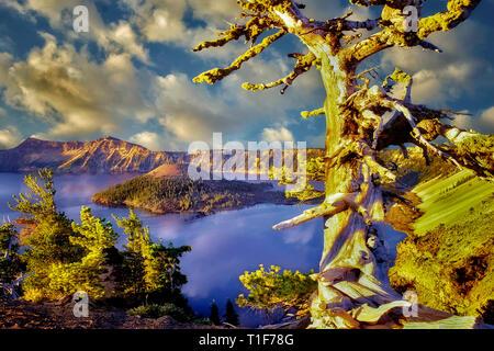 Crater Lake und Wizard Island mit unigue Kiefer. Oregon Stockbild