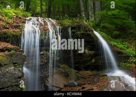 Domogled Nationalpark/Rumänien - Wasserfall in der riesigen Urwald in iauna craiove Unesco Weltnaturerbe. Stockbild
