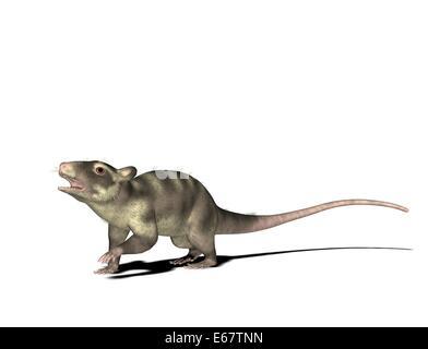 Pterodactylus / Pterodactylus Stockbild