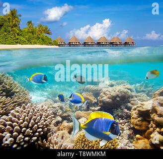 Malediven-Inseln, Unterwasser-Blick am Riff und tropische Fische Stockbild