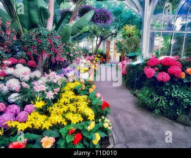 Eine Vielzahl von Blumen und Pfad in WW Seymour Botanical Conservatory. Tacoma, Washington Stockbild