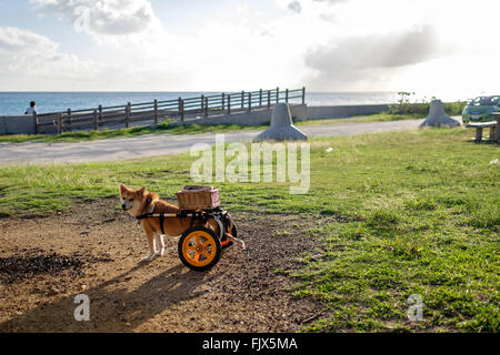 Anhänger Hund auf Feld gebunden Stockbild