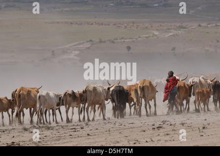 Afrika/Kenia/Masai Mara Nationalpark - Masai Hirten zu Fuß für Wasser während der schweren Dürre Stockbild