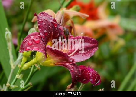 Blumen 850 Stockbild