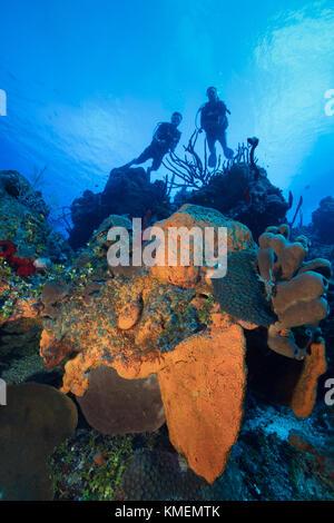 Taucher ein Riff auf den Grand Cayman Inseln erkunden. Stockbild